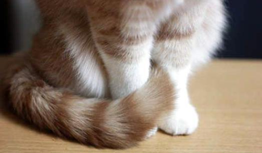 野外捕的像猫一样,但尾巴比家猫更长的是什么动物?