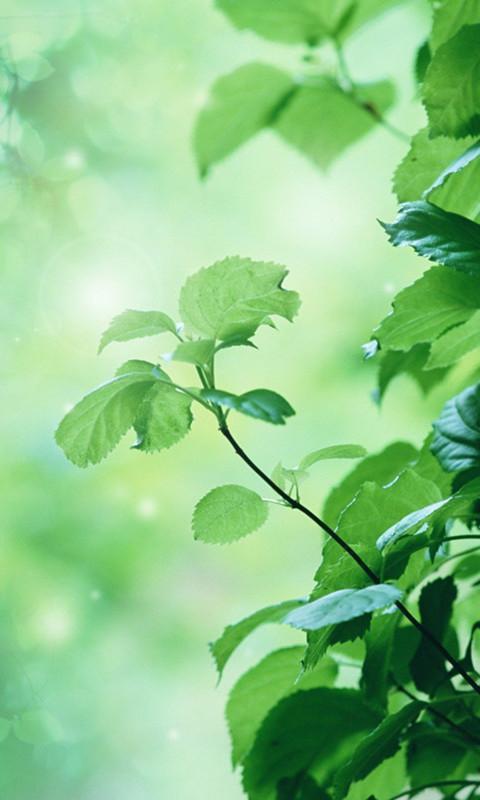我们的高清绿色护眼锁屏壁纸特意为手机一族的眼睛设计并制作的,日日