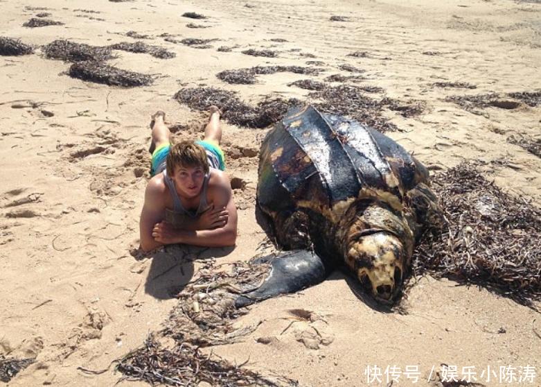高龄海龟摊尸岸边引游客合影,检查其腹中竟满是垃圾