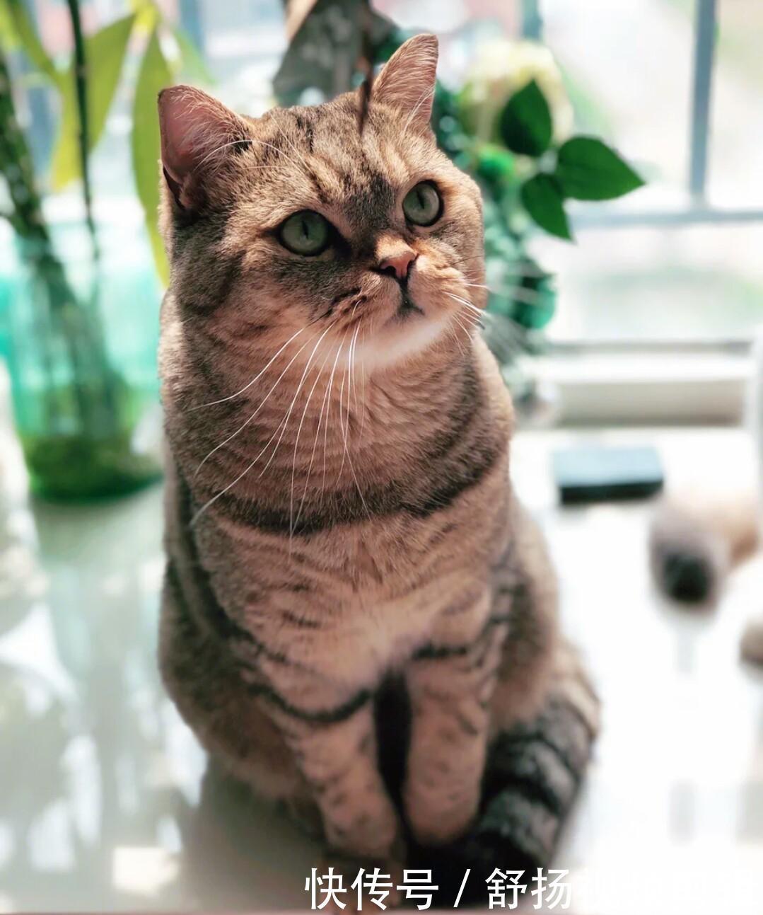 猫咪铲屎官更喜欢养女生,不仅仅是因为猫咪可北京宿舍女性图片