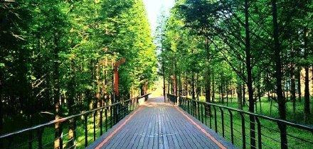 全长42.195公里,青山湖绿道全线贯通