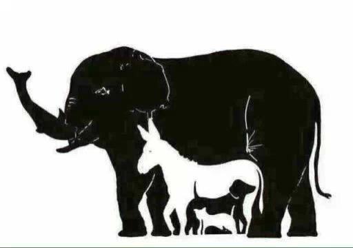 一个大象图让猜有多少动物