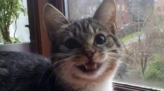 敲开心的小动物日常!!看着看着就跟着笑起来了好嘛....