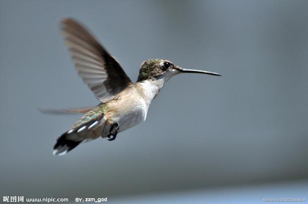 世界上最小的鸟是什么鸟?