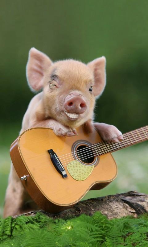 动物世界吉他歌谱