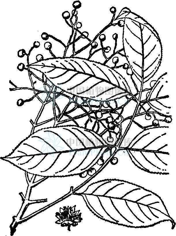 简笔画 设计 矢量 矢量图 手绘 素材 线稿 611_820 竖版 竖屏