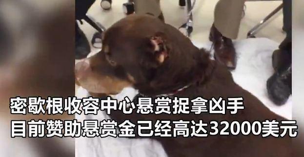 【转】北京时间       狗狗鼻子耳朵全被割 爱狗人士悬赏22万元擒凶 - 妙康居士 - 妙康居士~晴樵雪读的博客