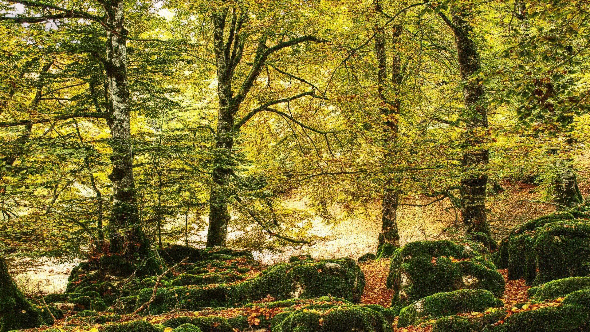 壁纸 风景 森林 桌面 1920