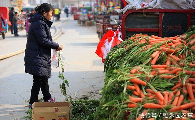 "<b>占全年蔬菜量5成的""烂菜叶"",可以这样做,变废为宝还能挣钱</b>"